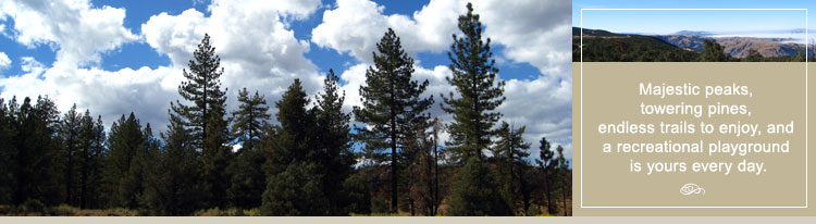 Los Padres National Forest Guide | Los Padres National